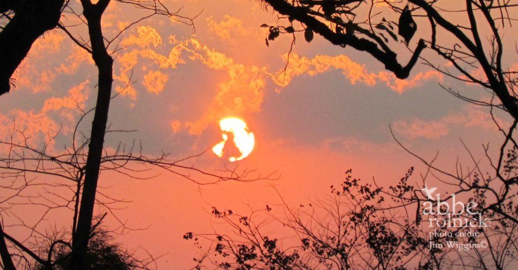 Sun's Revolutions